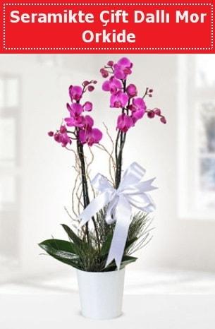 Seramikte Çift Dallı Mor Orkide  Uşak anneler günü çiçek yolla